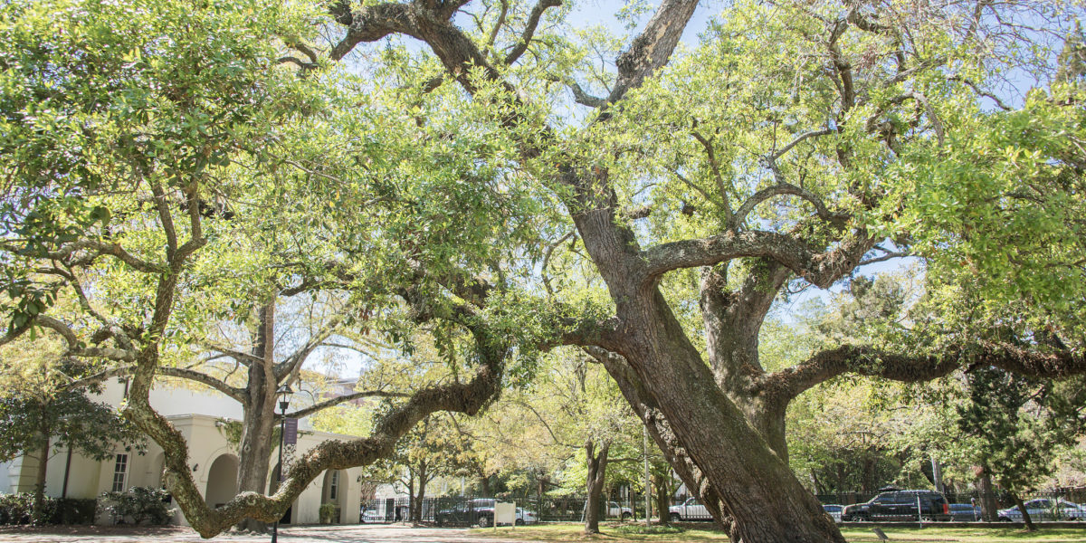 Ashley Hall Campus | Private School in Charleston, SC